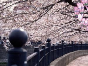 横浜市南区の画像