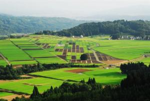 小千谷市の画像