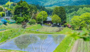丹波篠山市の画像