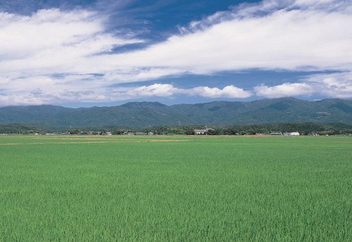 阿賀野市の画像