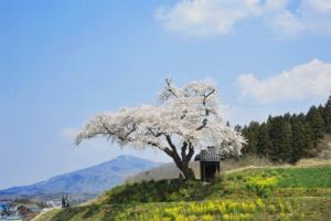 田村市の画像